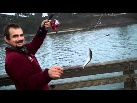 Yaquina Bay Herring Action