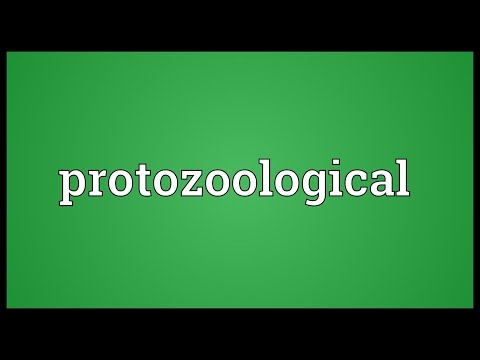 Header of protozoological