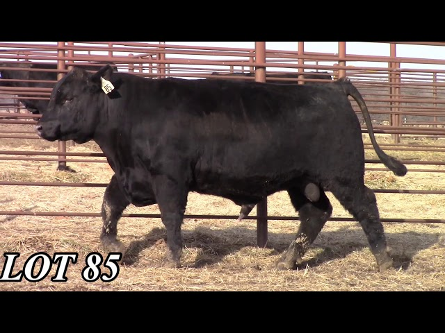 Mead Angus Farms Lot 85