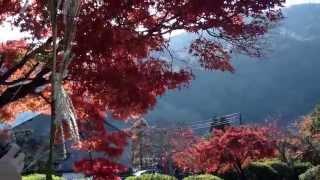 Все о Японии. Осень в Киото Уроки Японского Дарьи Мойнич(Получи бесплатные видео уроки по изучению японского языка : http://nihon-go.ru/katakana-youtube/ и начни учить японский..., 2014-02-18T21:06:54.000Z)