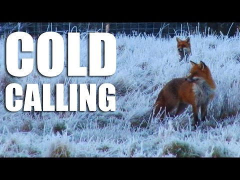 Cold Calling Foxes