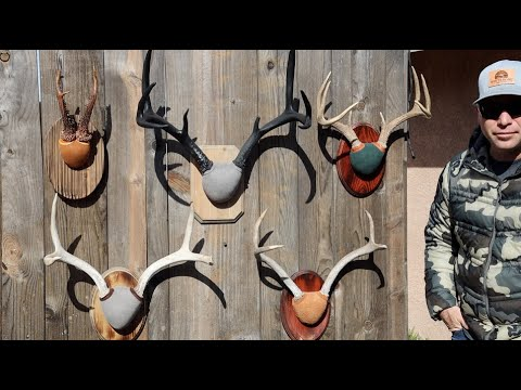 THE FAST EASY AND CHEAP WAY TO MOUNT ANTLERS
