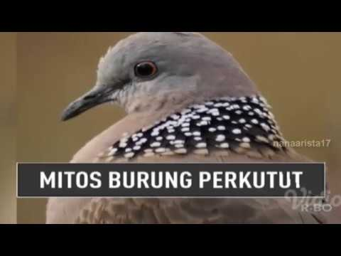 MITOS BURUNG PERKUTUT || On The Spot Trans 7 Terbaru 21 Desember 2017
