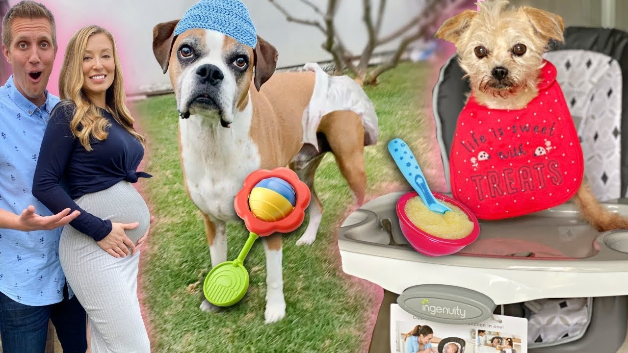 We're Pregnant! ? ? ? Treating Our Dogs Like Babies for 24 hours At Home