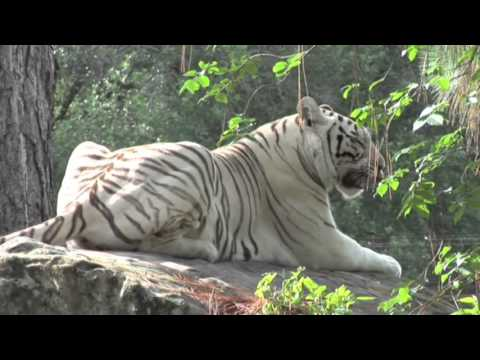 World's First White Tiger Safari & Zoo, Mukundpur