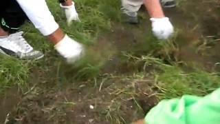 [水仙の会] 除草と土の掘り起こし