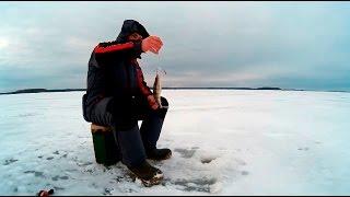 видео: За бершом на Иваньковское водохранилище