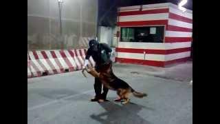 تدريب الكلاب ولا اروع dog tariner