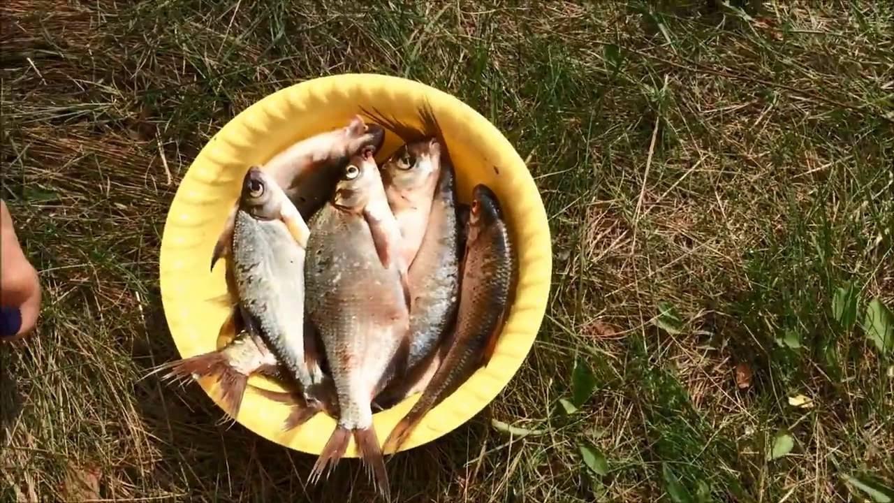 Рыбалка на Рузском водохранилище или бешеный летний клёв .