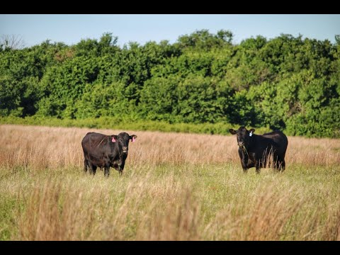 2,100 Acres Turkey Creek Cattle Ranch For Sale In Clay County, Texas - $2,375 Per Acre