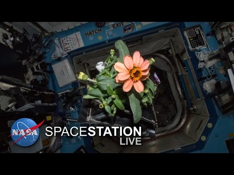 Space Station Live: Everything's Coming up Veggie