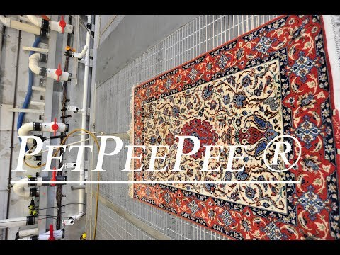 Baby Safe Oriental rug Area Carpet Cleaning