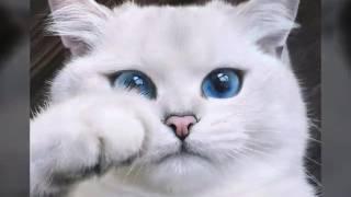 Самые красивые породы котов!💖💖💖