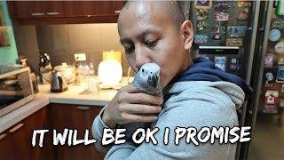 My Bird Is Sick  Vet results in | Vlog #285