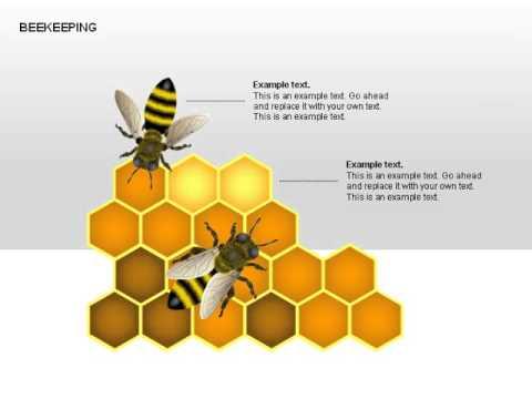Bee Diagrams Youtube
