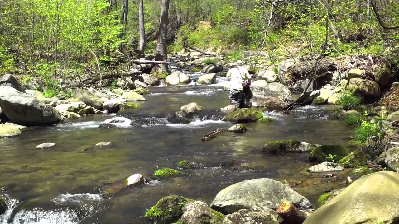 Fly fishing for brook trout on the rapidan river youtube for Virginia out of state fishing license