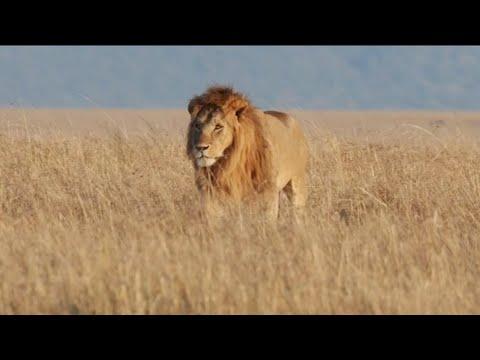 Ben Fero X Cash Flow - Üçe Beşe Bakamam [Video]