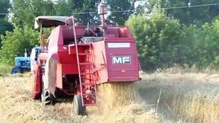130709 Прибирання пшениці Комбайн massey ferguson MF-240