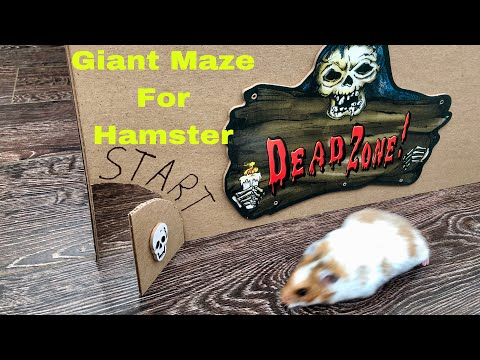 Halloween Giant Maze Labyrinth For Hamster - Halloween Hamster Obstacle Course