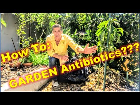 ANTIBIOTICS FOR ALL PLANTS!!! So EASY.... So NATURAL.... A 100% ORGANIC GARDEN!  by IV Organic
