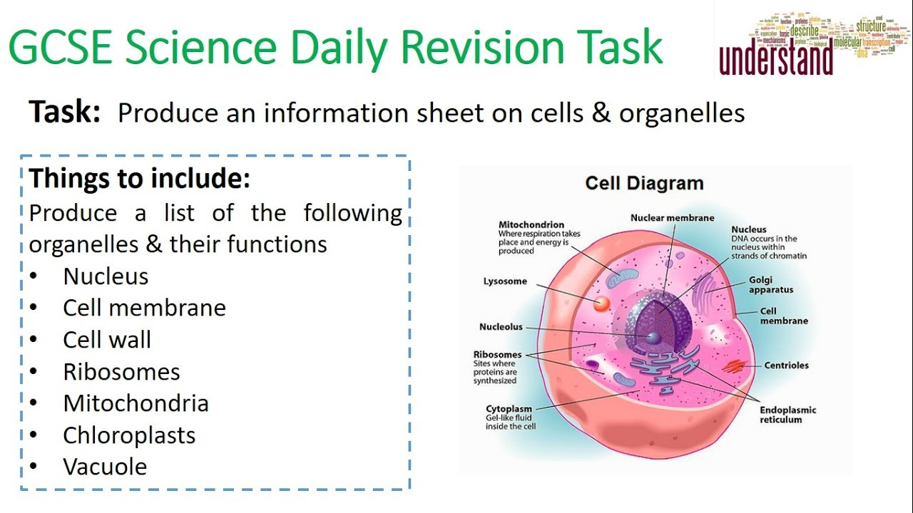 Gcse science daily revision task 1 cells youtube gcse science daily revision task 1 cells publicscrutiny Images