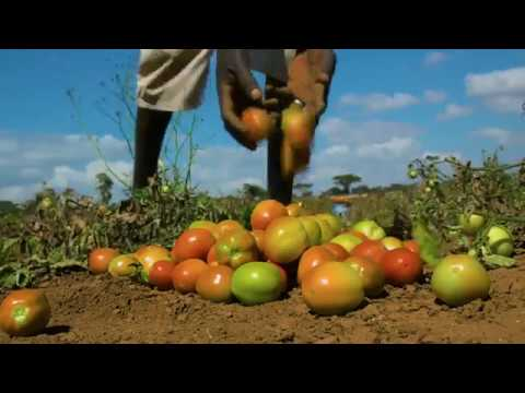 UNDP Climate Resilience Project - Documentary Film