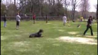 This Video Is Unavailable.     Group Dog Training Class