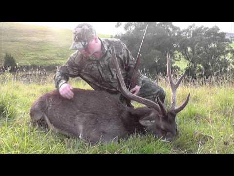 NSW rusa deer hunt