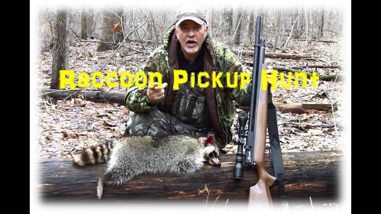 Raccoon Airgun Hunt