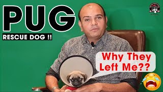 Why They left This Beautiful Toy Dog Breed || Pug The Vodafone Dog || Dog Rescue || Baadal Bhandaari