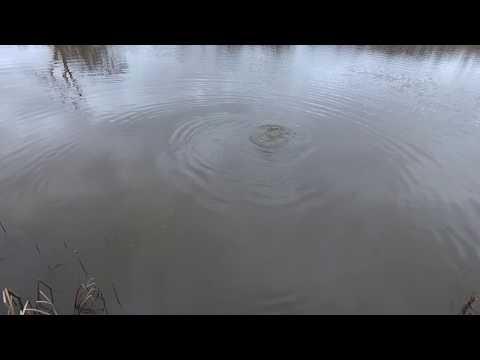 Christening Wychwood River and Stream 5wt Fly Rod @ Chalybeate