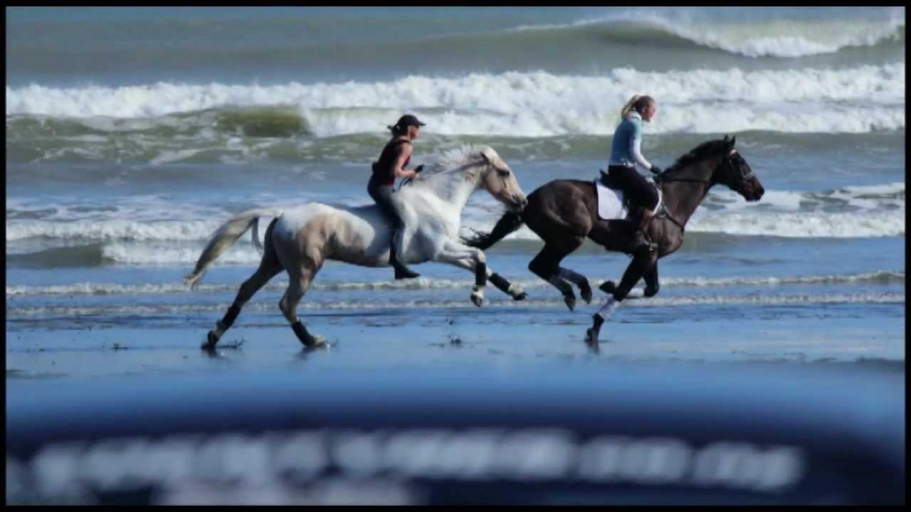 amazing beach day galloping bareback amp bridleless quotquotfree