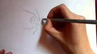 Видео: как нарисовать паука?(Видео о рисовании паука простым карандашом поэтапно для начинающих., 2016-01-04T10:36:08.000Z)