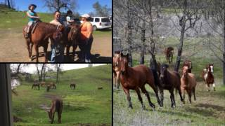 Owen Ranch Winter 2017
