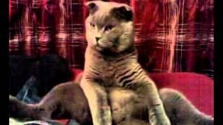 кот на попе 2