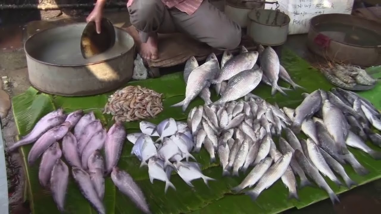 Kolkata - Fish Market 2 - YouTube