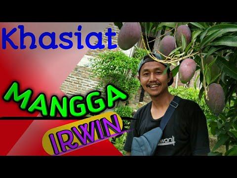 mangga-irwin,mangga-berkhasiat