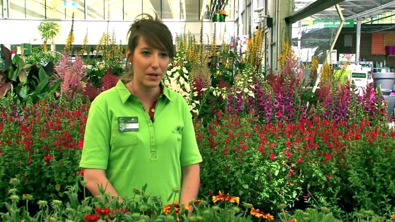 Chef De Groupe Jardinerie Truffaut Tv Youtube