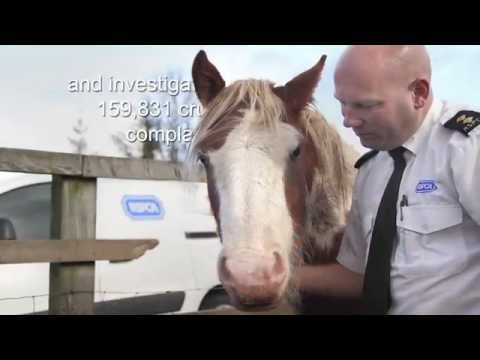RSPCA- What we do
