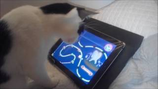 Chat qui joue a l'ipad (candy crush)