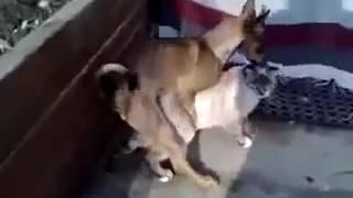Video mesum anjing perkosa kucing MANTAP