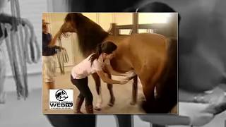 Repeat youtube video Horse and Girl born love, Animals breeding and Woman - Funny video 2016