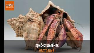 ТОП-12  Необычных домашних животных мира / пауки, крабы, змеи