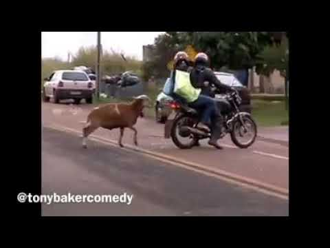 😂 Funny Tony Baker voiceover, 'CRAM!' video compilation. 👌💯
