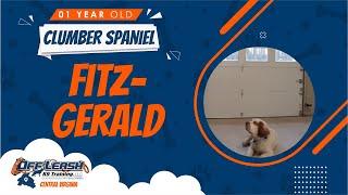 1 Y/O Clumber Spaniel (Fitzgerald) | Best Dog Trainers In Fredericksburg