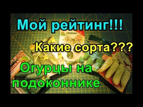 Рейтинг огурцов на подоконнике