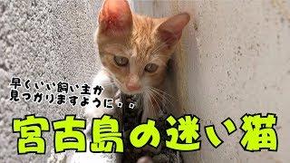 宮古島の迷い猫 殺処分なんて絶対に嫌だ