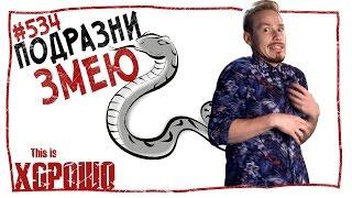 This is Хорошо - Подразни змею. #534