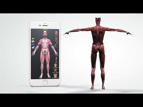 Human Anatomy Encyclopedia Apps On Google Play