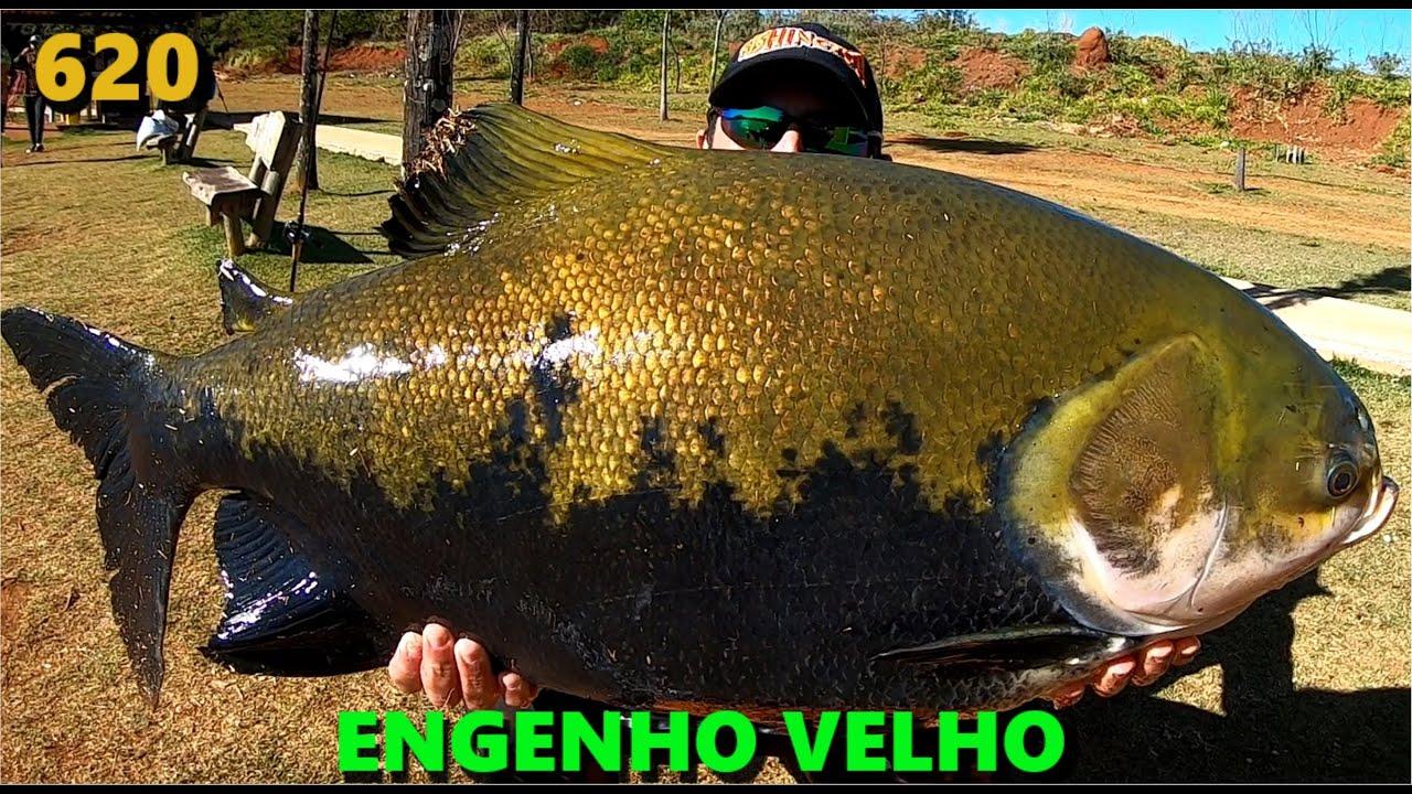 Muito vento e grandes tambaquis e tambacus no Engenho Velho em Goiás - Fishingtur Pesca 620